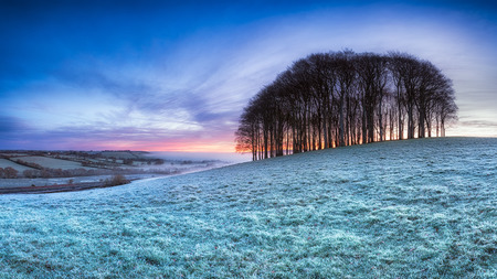 Frosty sunrise over a copse of Beech trees on a hill near Lifton on the devon and Cornwall border