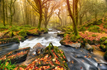 Fast flowing river through Autumn forest at Golitha Falls in Cornwall