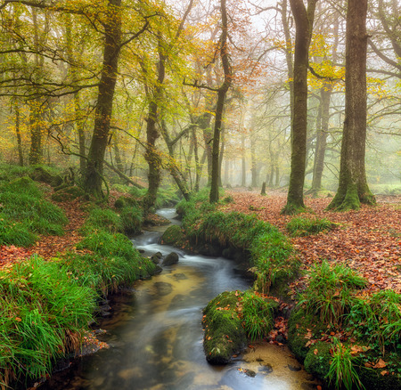 bodmin: A stream winding its way through misty Autumn woodland on Bodmin Moor in Cornwall