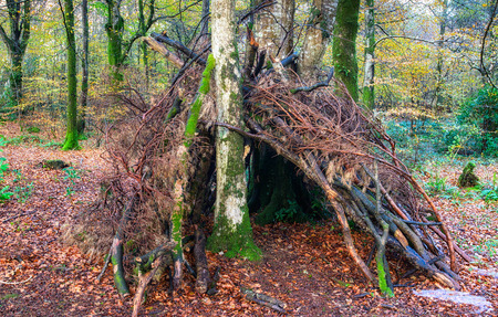 A bivouac survival shelter in the woods made from sticks and branches