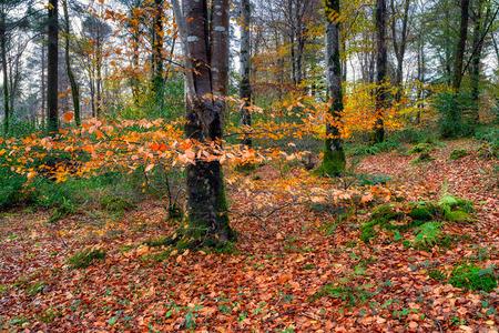 cornwall: Autumn woodland near Bodmin in Cornwall