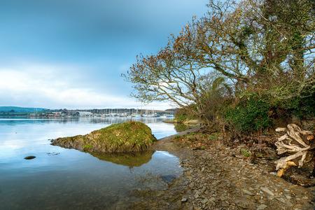 cornwall: The river Tamar at Mount Edgcumbe in Cornwall