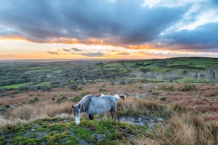 bodmin: Moorland ponies grazing on Caradon Hill near the Minions on Bodmin Moor in Cornwall