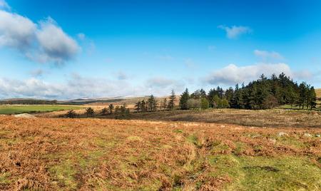 moorland: Wild moorland near Princetown on Dartmoor National Park in Devon