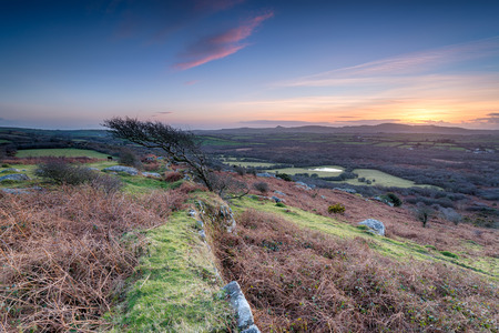 Beautiful sunset over a windswept tree at Helman Tor near Bodmin in Cornwall