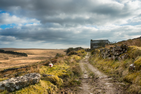 An old cart track winding through a remote part of Bodmin Moor in Cornwall photo