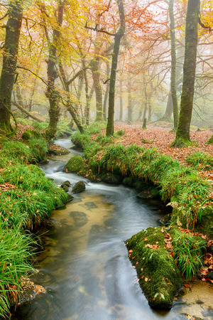 bodmin: Pretty stream running through misty woodland at Golitha Falls a steep wooded valley on the edge of Bodmin Moor in Cornwall