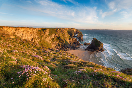 A carpet of thrift in bloom on cliffs abve Bedruthan Steps on the Cornwall coast between Nequay and Padstow photo