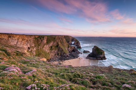 Sunset over flowering Sea Thrift growing on cliffs above Bedruthan Steps photo