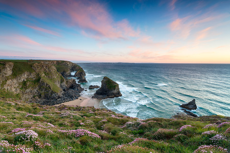 Sunset over clumps of flowering Sea Thrift growing on cliffs above Bedruthan Steps photo