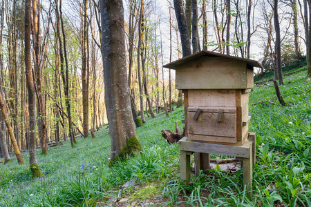 A traditional wooden beehive in bluebell woods photo