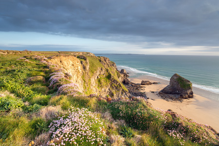 thrift: Sea Thrift in bloom on the north Cornwall coast at Bedruthan Steps near Newquay Stock Photo
