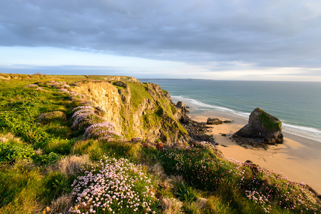 pinks: Sea Thrift in bloom on the north Cornwall coast at Bedruthan Steps near Newquay Stock Photo