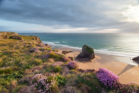 Summer sea thrift in bloom on cliffs above Bedruthan Steps on the north Cornwall coast photo