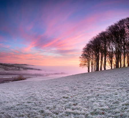 Misty frosty sunrise over a small copse of Beech trees on a knoll near Lifton on the Devon and Cornwall border