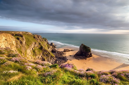 Clifftops carpeted with sea thrift at Bedruthan Steps on the Cornwall coast photo