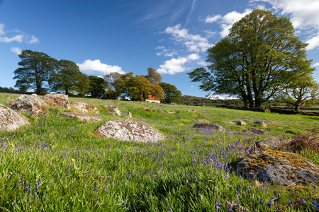 mire: Spring at Emsworthy Mire near Widecombe in the Moor on Darmoor National Park in Devon Stock Photo