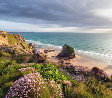 Zomertijd in Cornwall met de zee zuinigheid in bloei op rotsen boven Bedruthan Stappen op het South West Coast Path tussen Padstow en Newquay