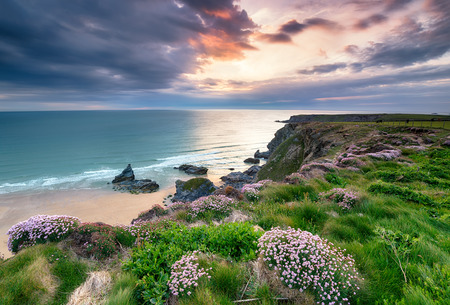 Sea Thrift on cliffs at Park Head on the South West Coast Path near Porthcothan Bay photo