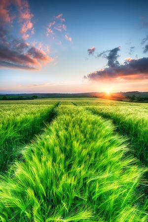 Beautiful dramatic sunrise over fields of ripening barley Stock Photo