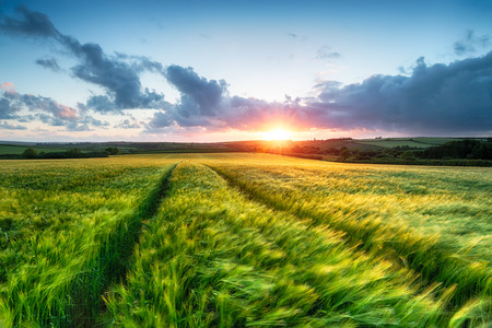 Sunset over farm land with barley blowing in the breeze photo