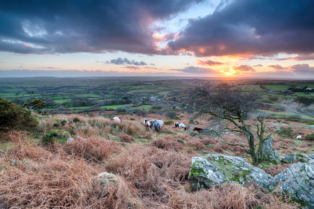 bodmin: Sunset over horses grazing on Bodmin Moor in Cornwall