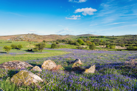 Summer bluebells at Holwell Lawn on dartmoor National Park in Devon Stock Photo