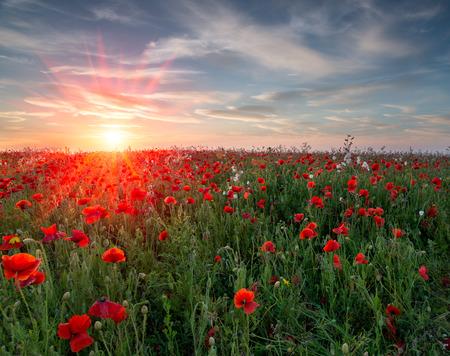 Zonsondergang over een veld van levendige rode klaprozen en wilde bloemen