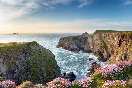 thrift: Steep cliffs and wild Thrift in flower at Longcarrow Cove on the north coast of Cornwall Stock Photo