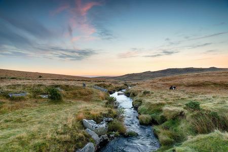 Black-a-ven-Brook flowing through wild rugged moorland near Okehampton on Dartmoor National Park in Devon