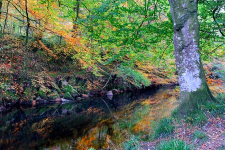 lanhydrock: Autumn on the river Fowey at Respryn woods in Cornwall