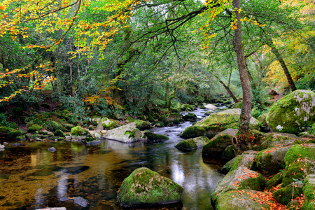 tranquillity: Autumn tranquillity on the river Plym as it flows through beautiful forest at Dewerstone on Dartmoor National Park in Devon Stock Photo