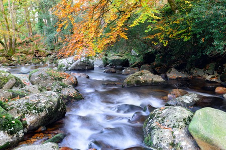 beautiful woodland: Autumn on the banks of the river Meavy as it flows through beautiful woodland at Dewerstone on Dartmoor National Park in Devon