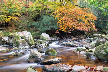 beautiful woodland: The river Plym flowing through beautiful Autumn woodland at Dewerstone on Darmoot National Park in Devon Stock Photo