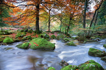 beautiful woodland: Beautiful woodland in Autumn colour at Dewerstone on Dartmoor National Park in Devon Stock Photo