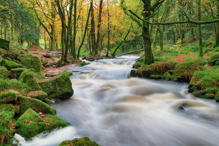 woodland scenery: Stunning Autumn scenery as the river Fowey cascades over mossy rocks in woodland at Golitha Falls on the southern edge of Bodmin Moor in Cornwall Stock Photo