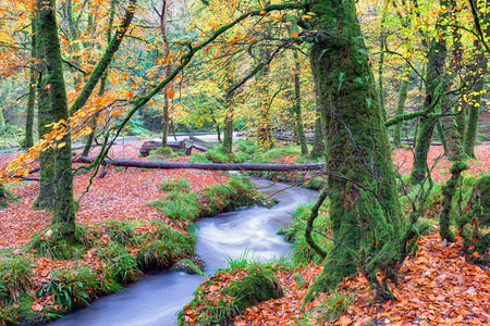 bodmin: A woodland stream at Golitha Falls on Bodmin Moor in Cornwall