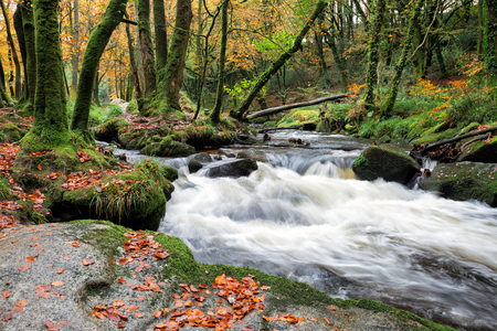 beautiful woodland: Fast flowing riverover mossy rocks in beautiful woodland at Golitha Falls in Cornwall Stock Photo
