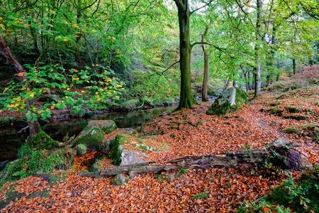 devon: Beautiful woodland at Dewerstone on Dartmoor in Devon
