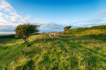 columb: Evening light at Castle An Dinas an iron age hillfort near St Columb in Cornwall