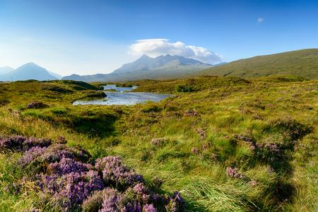 turba: turbera y el brezo en la isla de Skye en Escocia con la cordillera de Cuillin en el fondo
