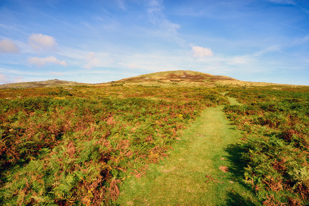 Dartmoor National Park, looking towards Brat Tor near Lydford in Devon
