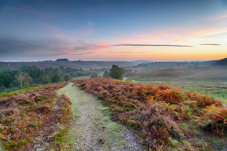 Sunrise over Rockford Common in the New Forest National Park in Hampshire 스톡 콘텐츠