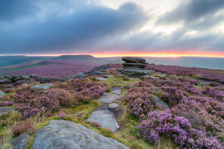 Moody summer sunrise over heather at Over Owler Tor in the Derbyshire Peak District, with the hillfort Carl Wark in the distance