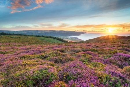 Atemberaubender Sonnenuntergang über blühendem Heidekraut in Bosington in der Nähe von Minehead an der Küste von Somerset