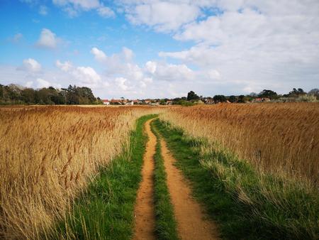 A footpath through reedbeds at Thornham on the Norfolk coast