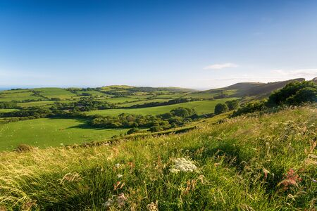 Summer in the Dorset countryside, looking out to the coast at Kimmeridge