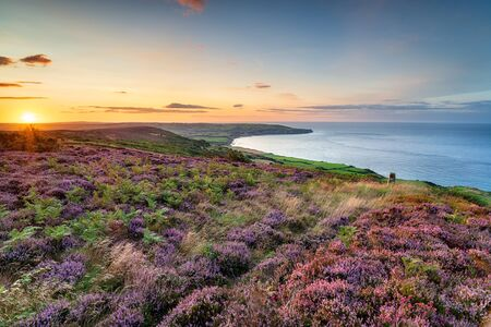 Summer heather in bloom on the North York Moors national park at Ravenscar and looking out to Robin Hood's Bay Stockfoto