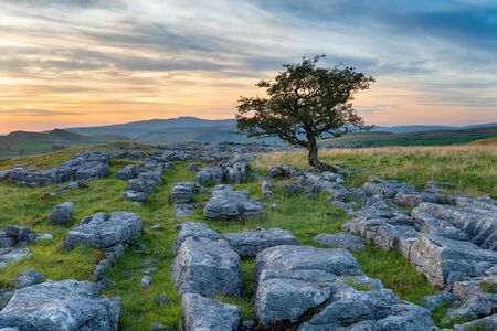 A lone tree on a limestone pavement at the Winskill Stones near Settle in the Yorkshire Dales