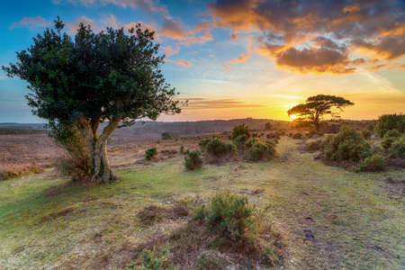 Beautiful sunset in the New Forest at Bratley View near Lyndhurst in Hampshire Stock fotó